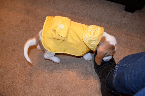Rommey in raincoat