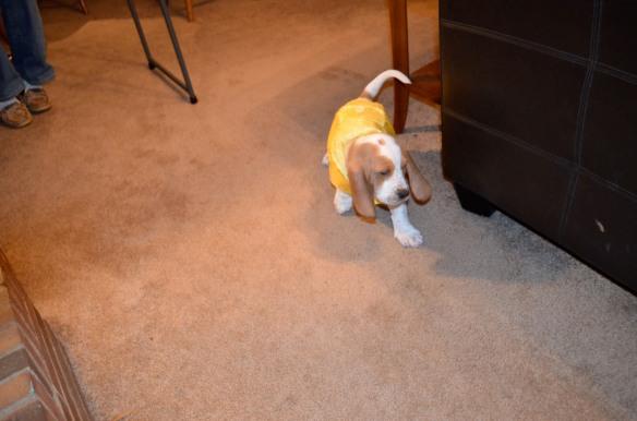 Rommey in Raincoat