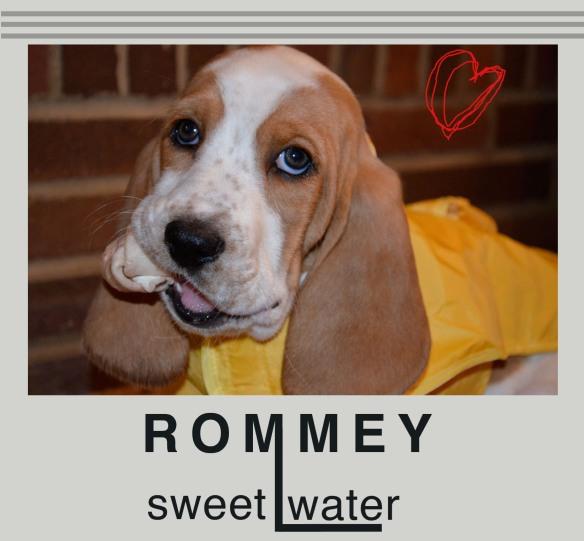 Rommey Sweet Water